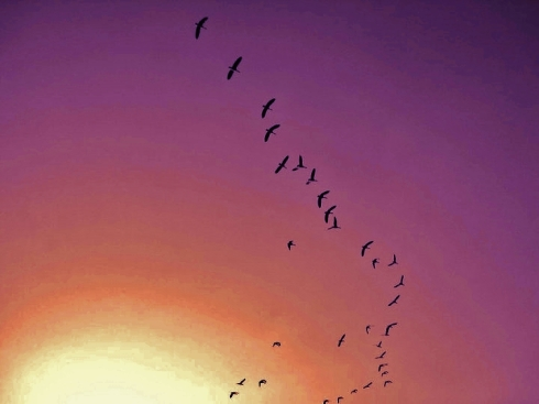 birds sepia purple
